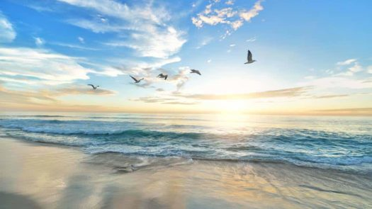 Birds flying over beach water - Serendipity Anna Maria